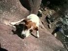 Tierisch extrem Top 10 - Hunde 2 - Dog TV