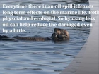 Help the Sea Otters